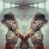 Tilia: focus